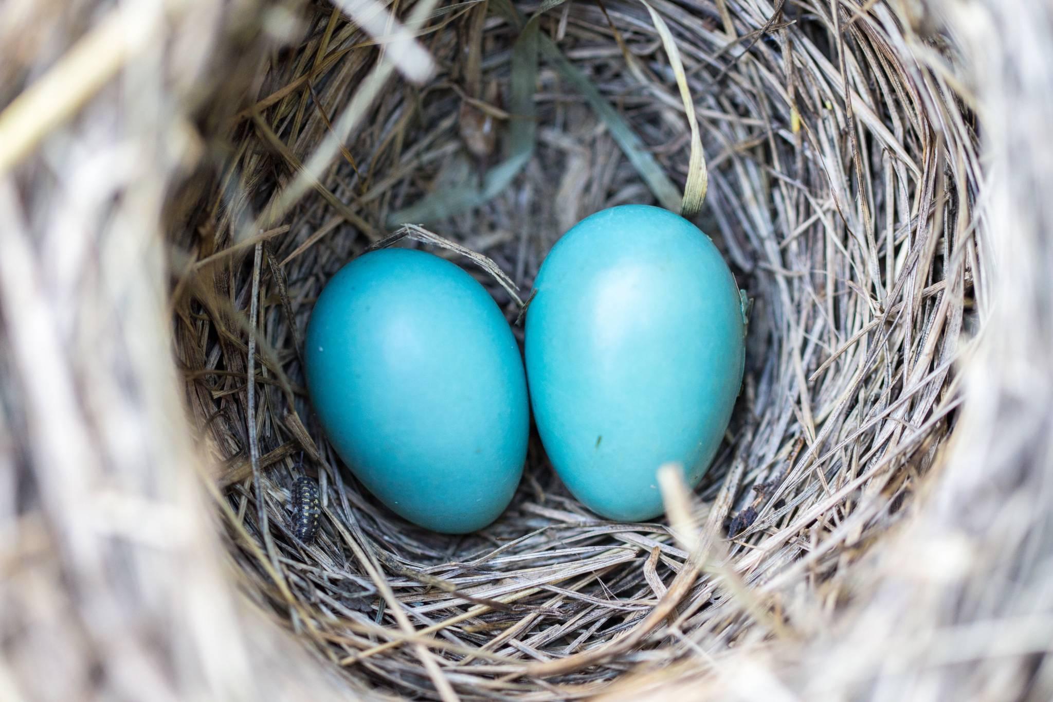 Homeowners Insurance Twin Palms Insurance Group